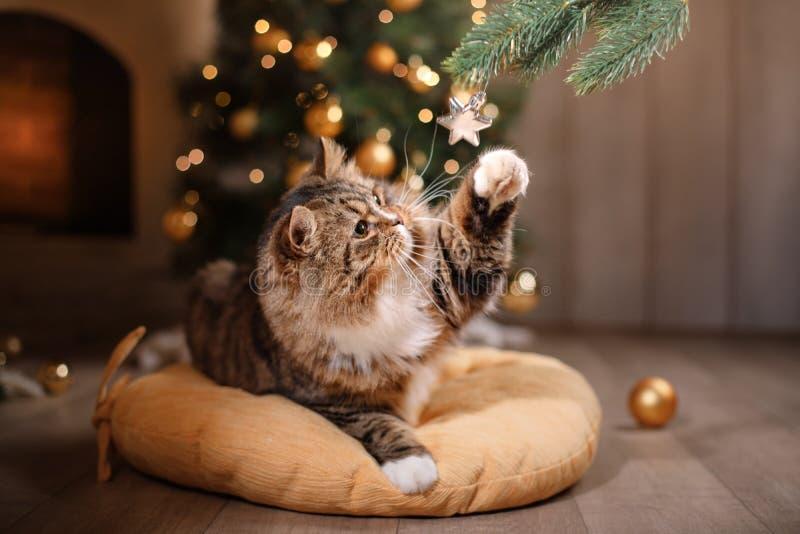 Tabby и счастливый кот Сезон 2017 рождества, Новый Год, праздники и торжество стоковое фото rf