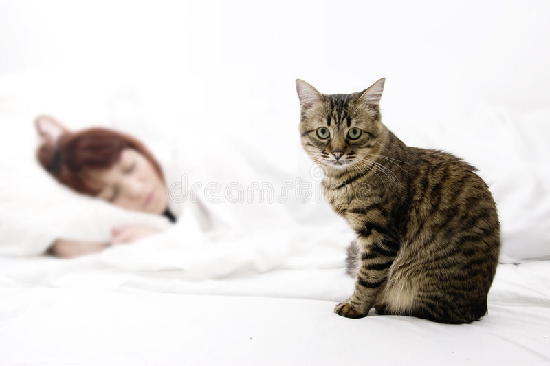 tabby кота стоковые фотографии rf