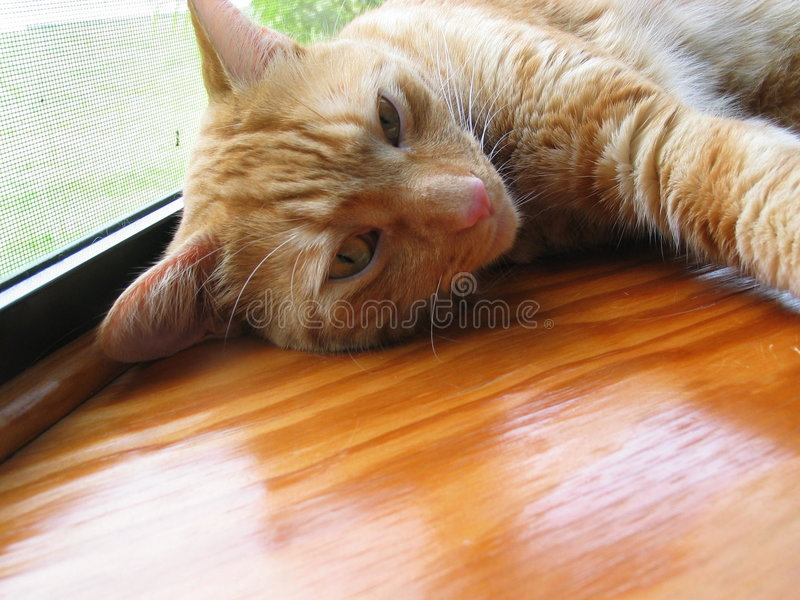 Download Tabby stock image. Image of resting, napping, tabby, feline - 16157