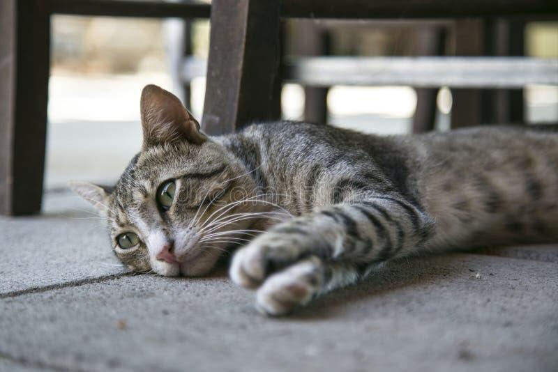 Кот Tabby лежа на земле стоковые изображения