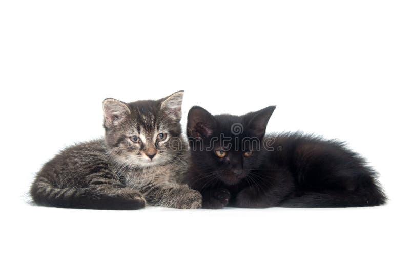 Tabby and black kitten resting stock photos