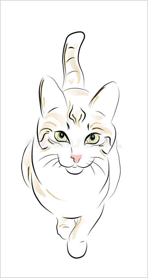 Free Tabby Cat Stock Image - 14698191