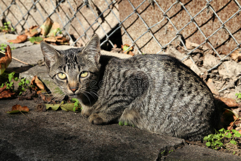 Tabby Cat Stock Images