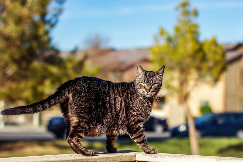 Tabby Cat photographie stock libre de droits