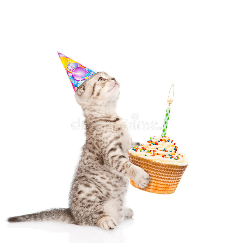 Tabby cat in birthday hat holding cake with candles. isolated on. White background royalty free stock photo