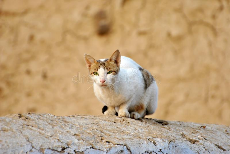 Tabby Cat blanche sur Grey Rock photos stock