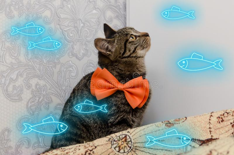 Tabby cat with bow at his neck looks at neon glow fishes of blue color swimming around him.  stock photo