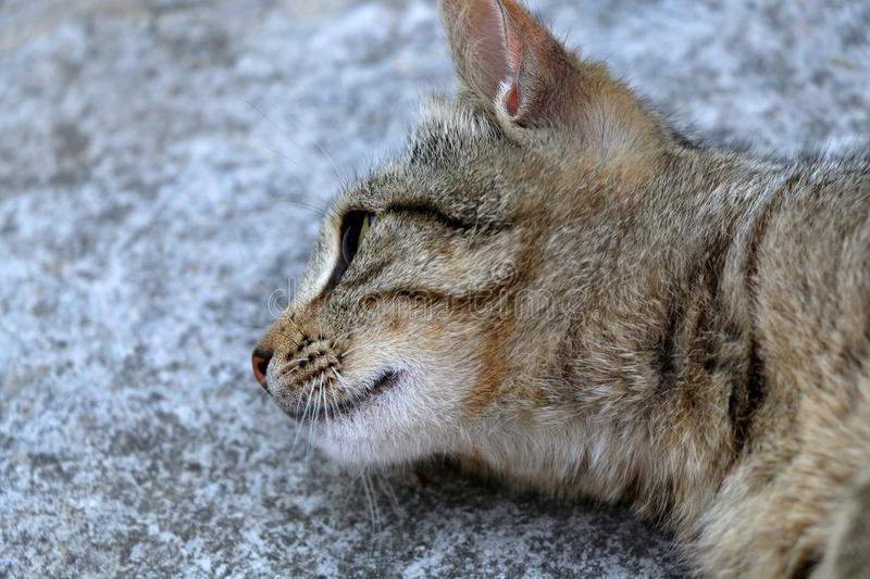 Tabby Cat. Brown tabby cat lying on the floor outdoor. Close-up, selective focus royalty free stock photos