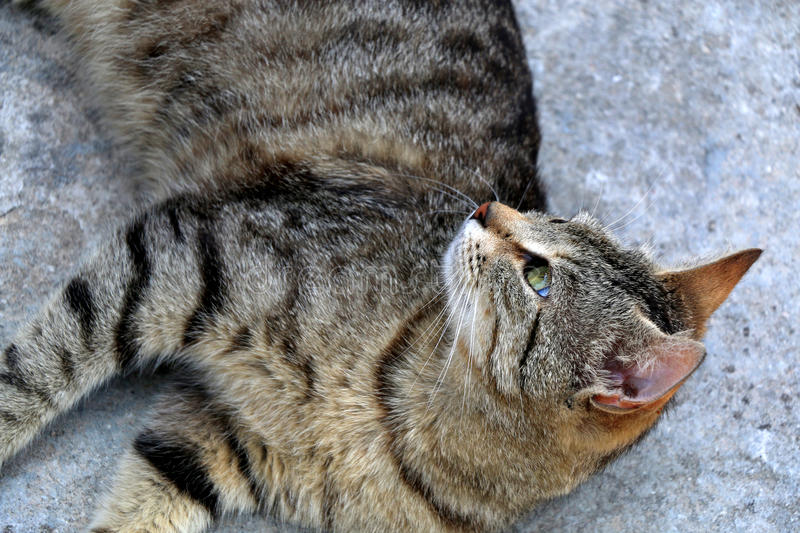Tabby Cat. Brown tabby cat lying on the floor outdoor. Close-up, selective focus stock photo
