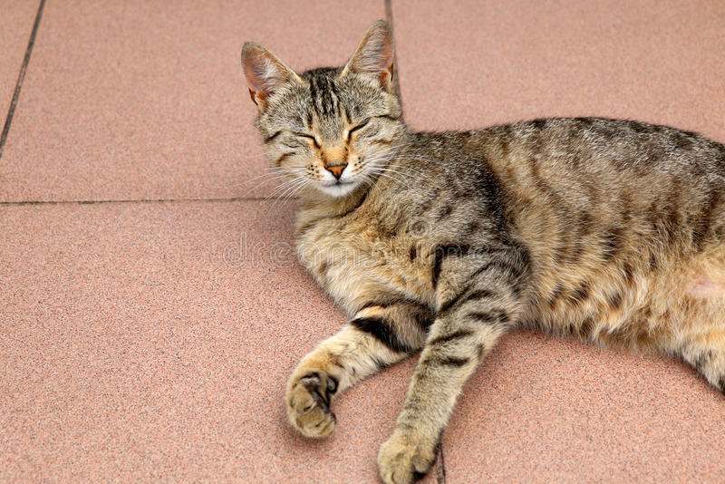 Tabby Cat. Brown tabby cat lying on the floor, trying to sleep. Close-up, selective focus stock photos