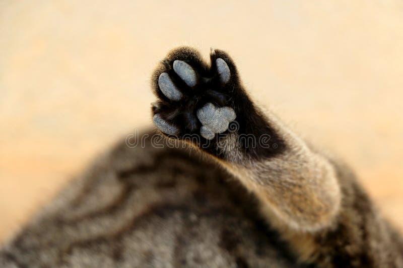 Tabby Cat. Brown tabby cat, paw close-up. Selective focus stock photos