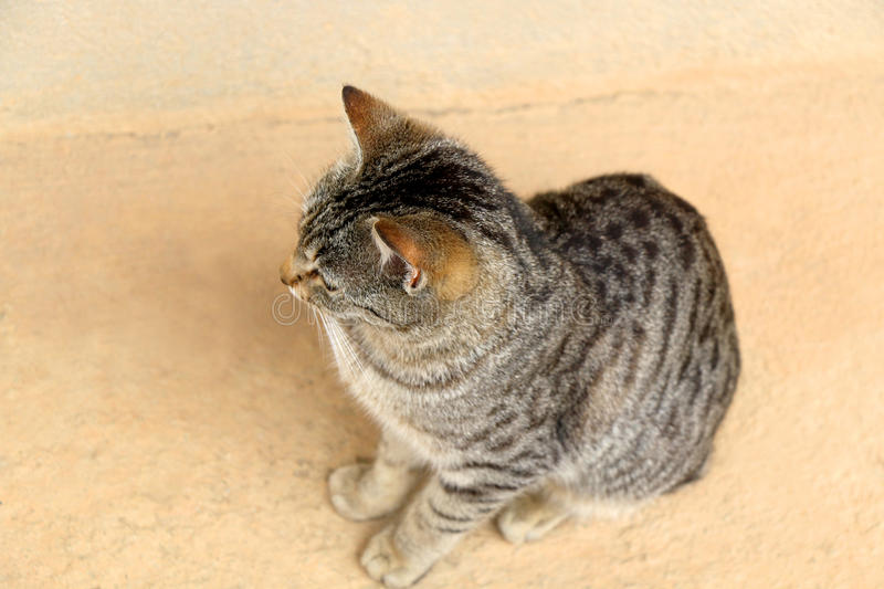 Tabby Cat. Brown tabby cat sitting on the floor outdoor. Selective focus stock photo
