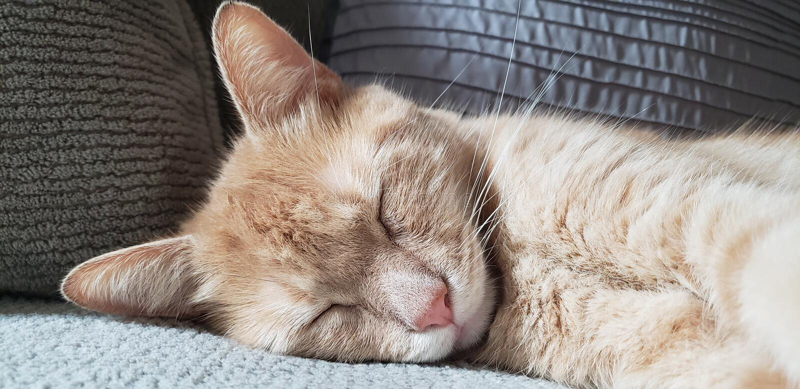 Tabby Cat cansada anaranjada foto de archivo