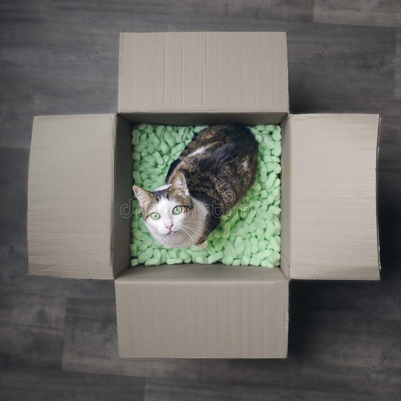 Tabby cat in a cardboard box looking curious up to the camera. Square image stock images