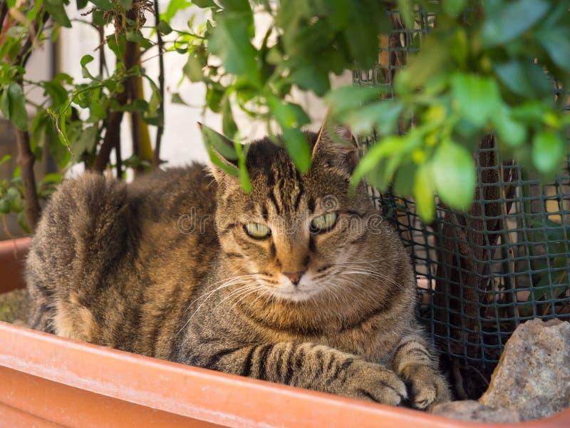 Tabby Cat che gode della tonalità in una scatola della piantatrice fotografie stock