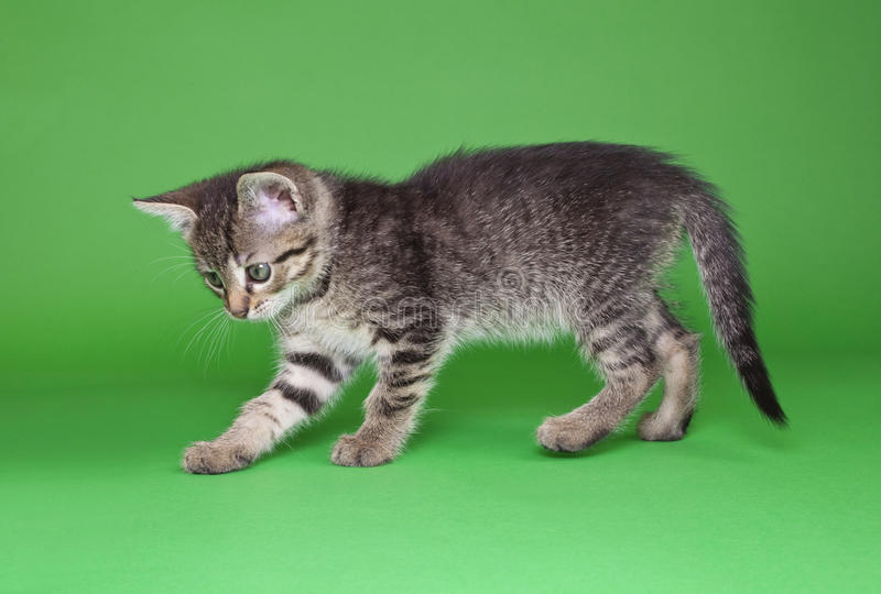 Tabby Cat Cutout juguetona fotos de archivo libres de regalías