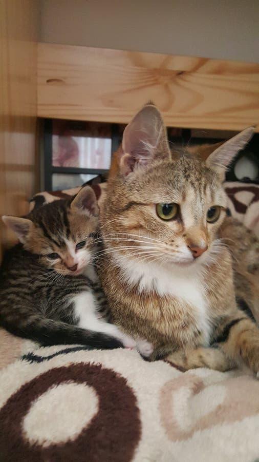 Tabby Cat en katje royalty-vrije stock afbeeldingen