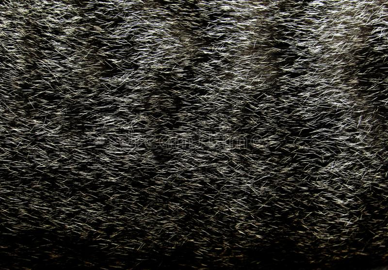 Tabby Cat Fur Close-up. Close-up of a grey tabby cat fur for texture or background stock photography