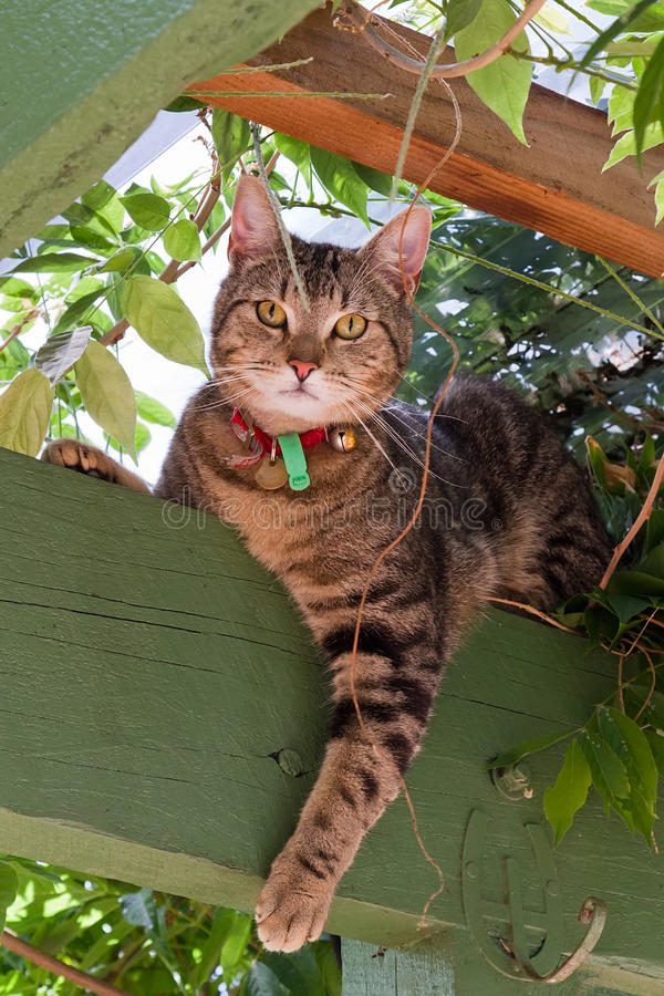 Tabby cat in garden royalty free stock image
