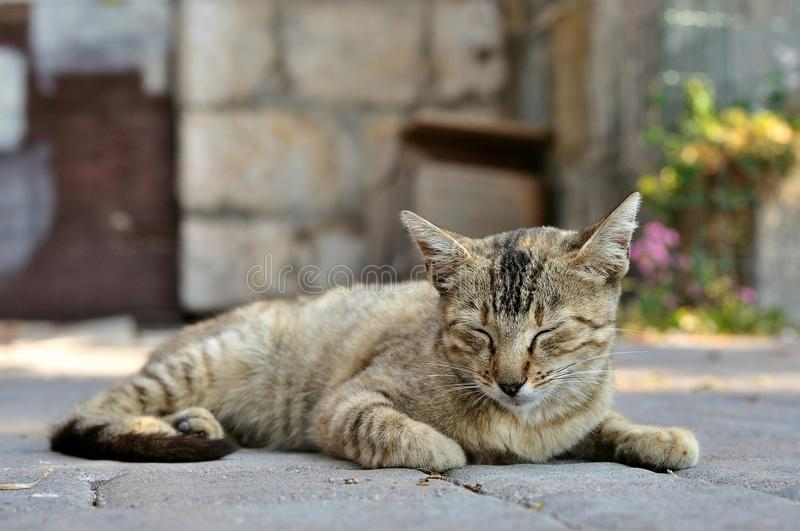 Tabby cat on the ground royalty free stock photography