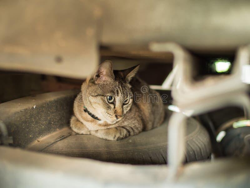 Tabby Cat Hiding From The Enemy lizenzfreie stockfotos