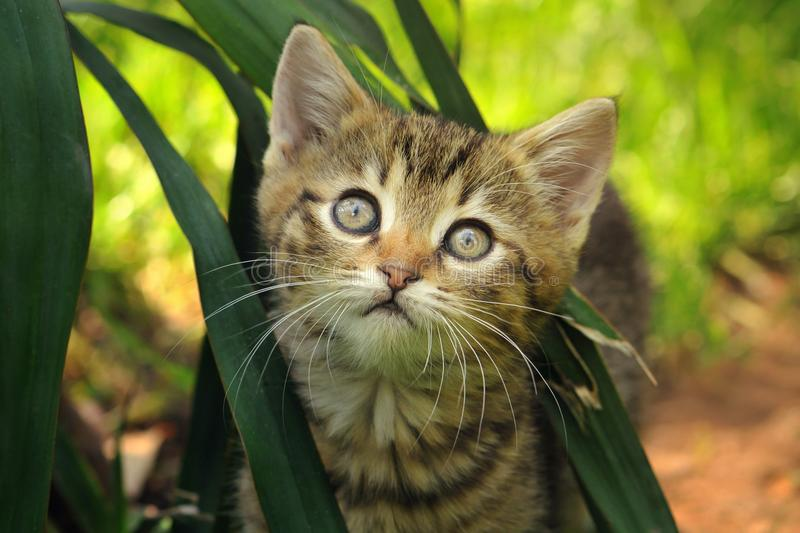 Tabby cat hiding in the flowers stock photography
