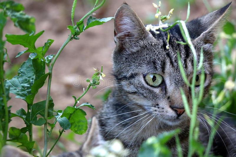 Tabby Cat. Hiding in the garden. Selective focus stock images