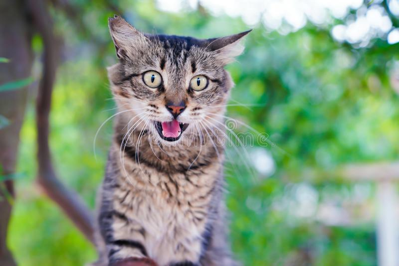 Tabby cat hissing on a tree royalty free stock images