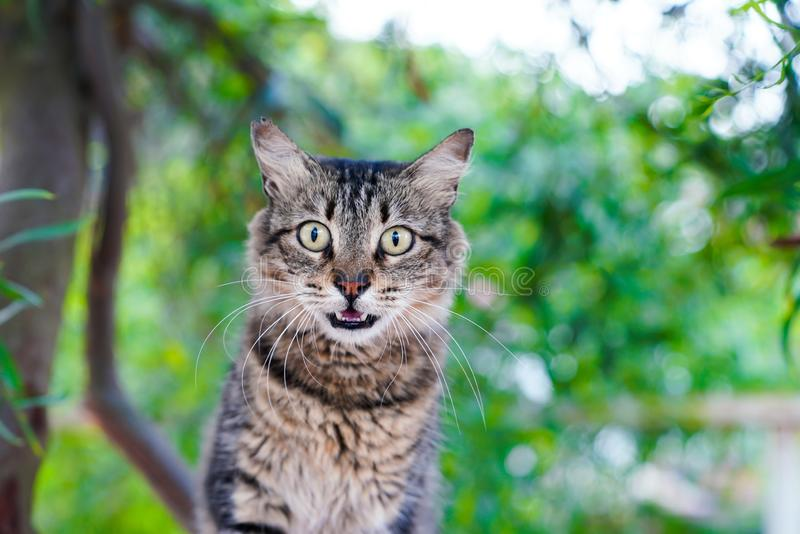 Tabby cat hissing on a tree royalty free stock photography