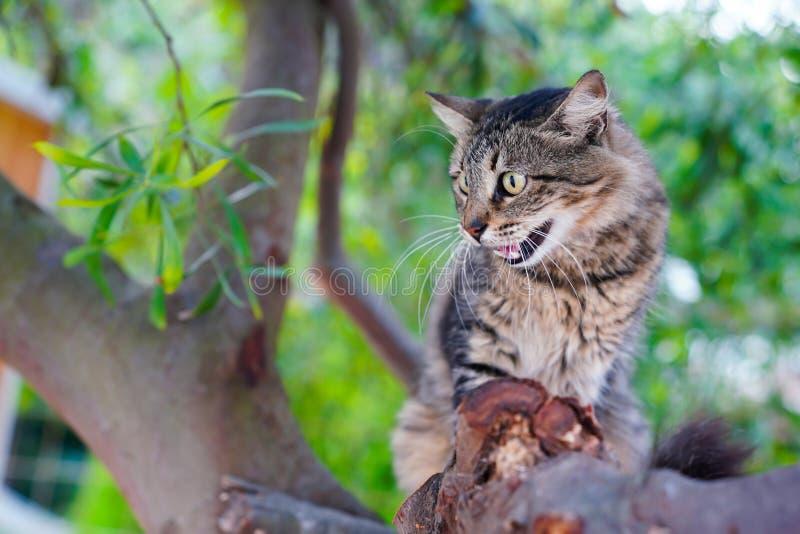 Tabby cat hissing on a tree stock photos