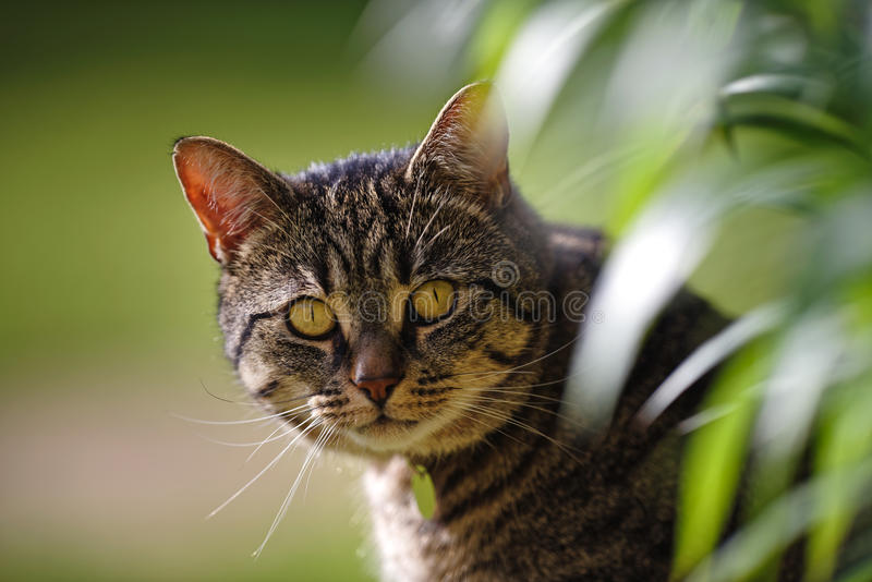 Tabby Cat with Lily Leaves stock image