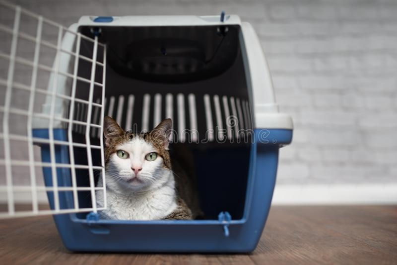 Tabby cat loking out of the open travel box. Soft focus with copy space royalty free stock photo