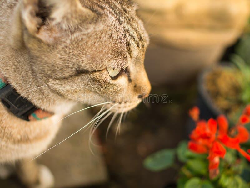 Tabby Cat Looking lizenzfreie stockfotografie