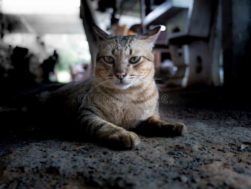 Tabby Cat Lying aus den Grund stockfoto