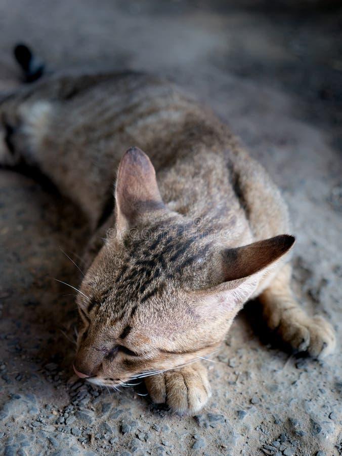 Tabby Cat Lying aus den Grund lizenzfreies stockbild