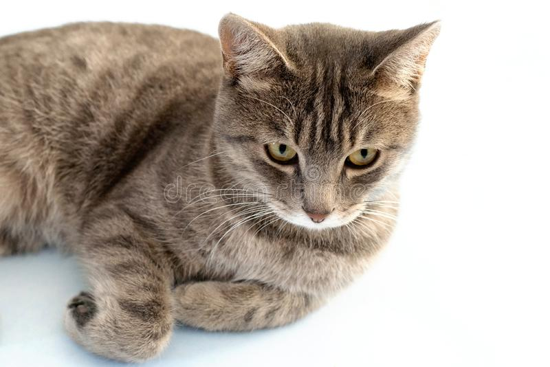 Tabby cat lying on the floor. Gray cat with green eyes plays on a blue surface. Tabby cat lying on the floor. Gray cat with green eyes plays on a blue surface royalty free stock image