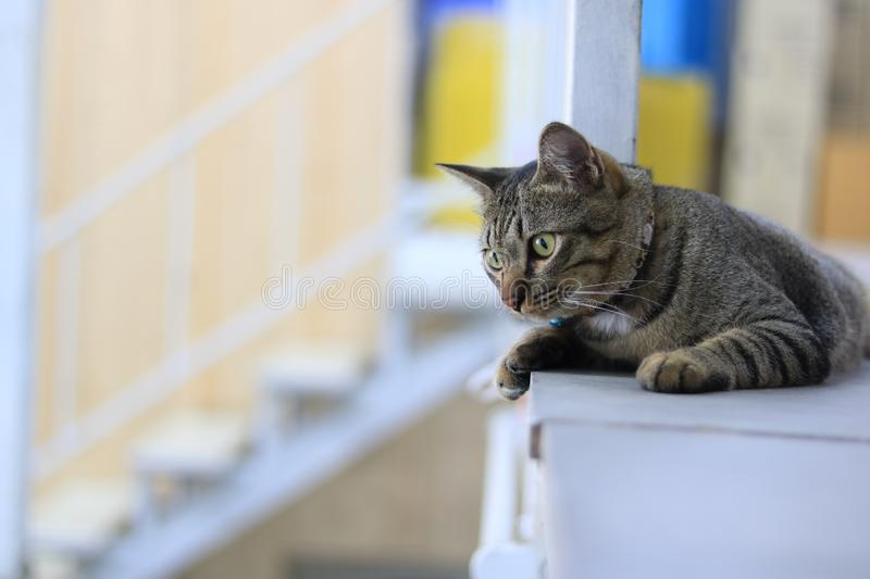 A tabby cat lying on the floor. And looking down stock photography