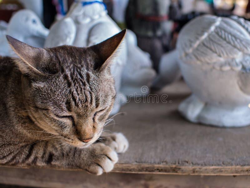 Tabby Cat Lying mit Puppen lizenzfreies stockfoto