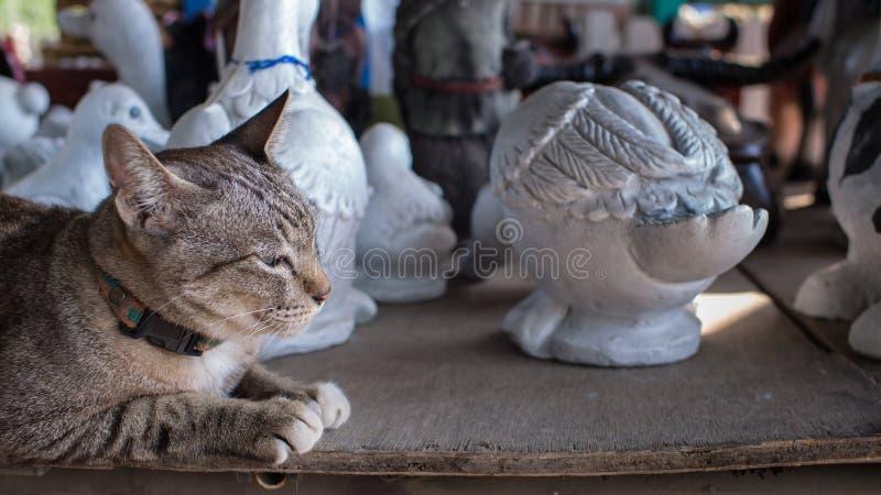 Tabby Cat Lying mit Puppen stockbilder