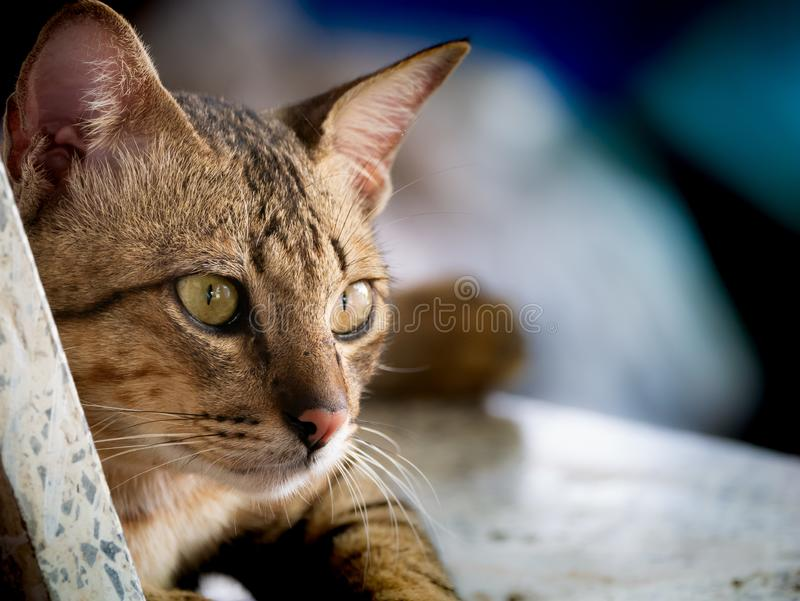 Tabby Cat Lying on The Stone Chair stock photos