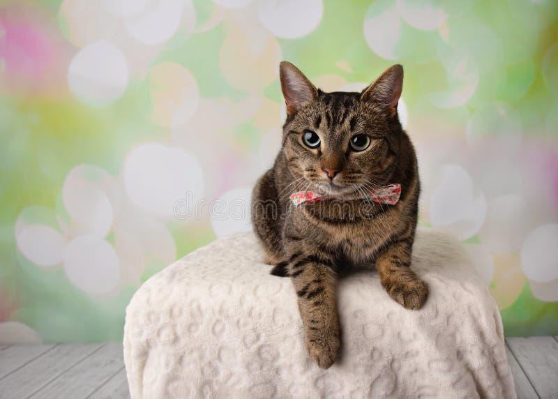 Tabby Cat med gröna ögon som ligger ner den bärande blomman Bowtie arkivbild