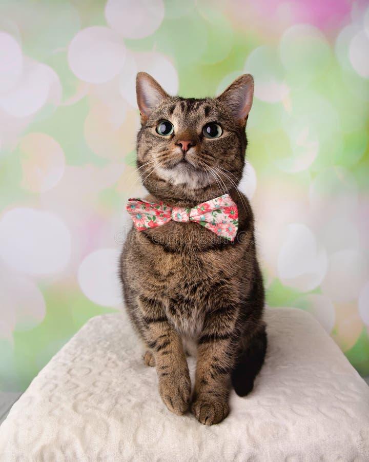 Tabby Cat med gröna ögon som sitter se bärande den upp blomman Bowt arkivbild
