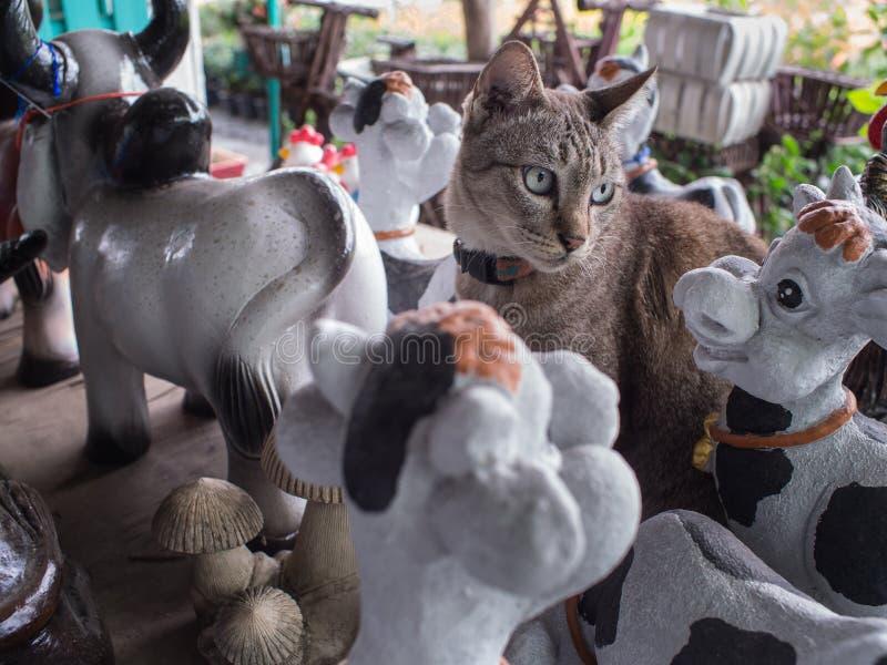 Tabby Cat Mixed mit Puppen lizenzfreie stockbilder