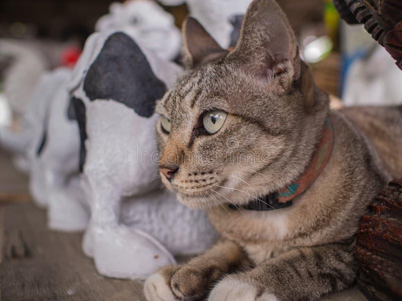 Tabby Cat Mixed mit Puppen stockfoto