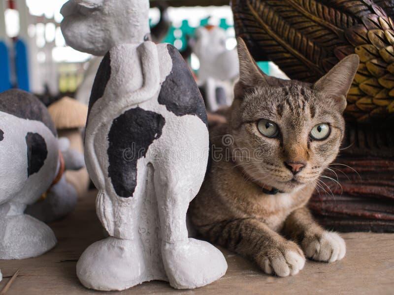 Tabby Cat Mixed mit Puppen stockbild