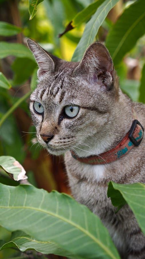 Tabby Cat nel mango fotografia stock