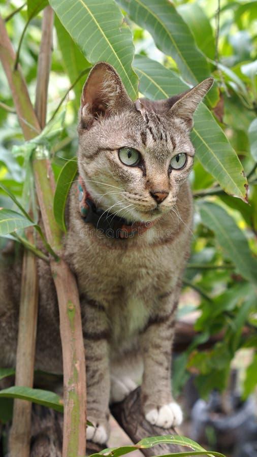 Tabby Cat nel mango fotografie stock libere da diritti