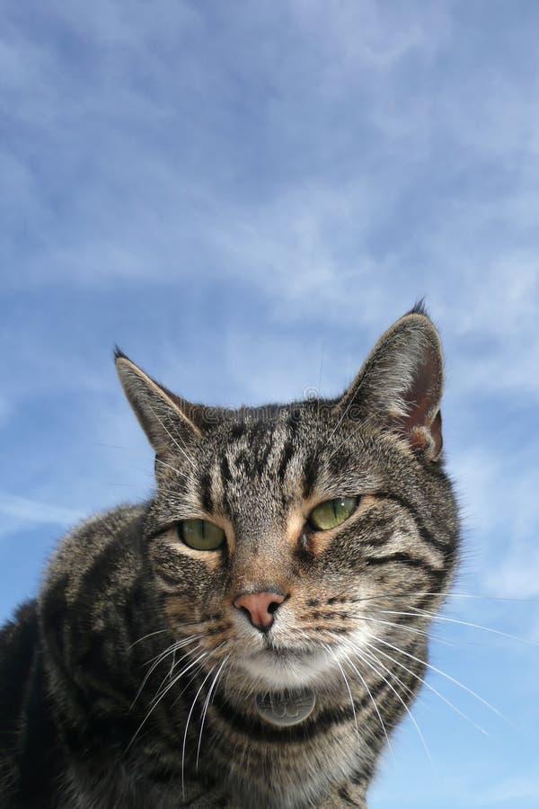 Tabby cat portrait. Beautiful tabby cat portrait agaist blue cloudy sky stock photography