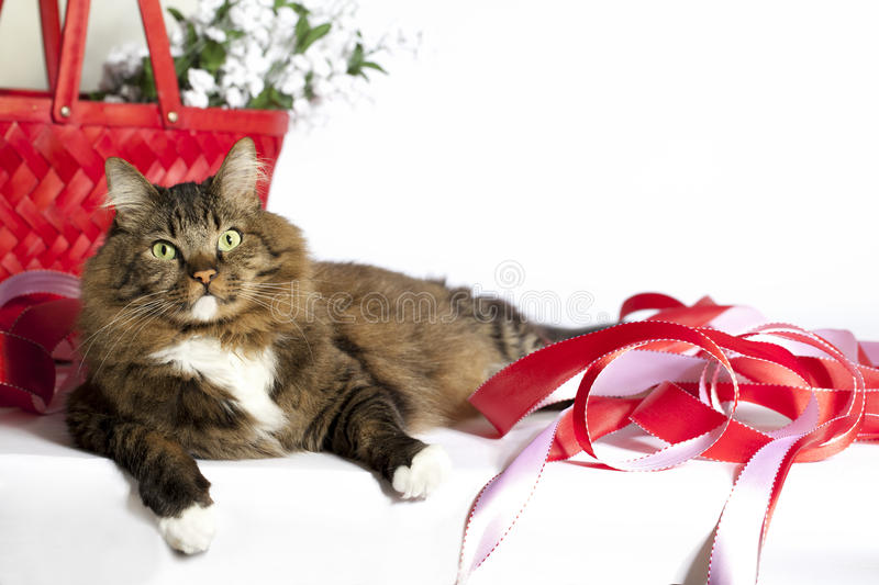 Tabby Cat with Red Ribbons. A brown tabby cat with green eyes laying on white surface with red ribbons and red wicker basket in background stock photo