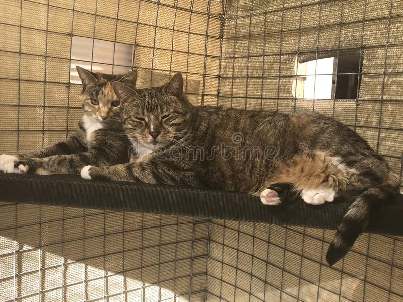 Sister and Brother Cat enjoying sun in cat enclosure royalty free stock photos